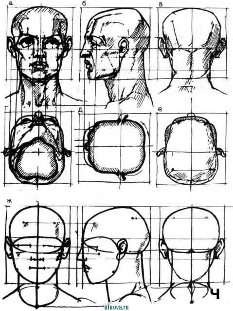 Маяками боковых частей головы