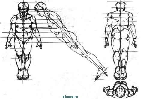 фигура человека вид сверху